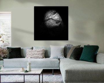 Hinterleuchtetes Blatt in schwarz-weiß. von TimJonkerphotography