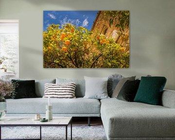 Sinasappelboom in Malaga bij het Alcazaba de Malaga van Lizanne van Spanje