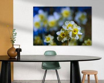 Voorjaar's bloemen  (narcissen) van Frans Roos