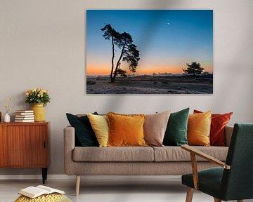 Eenzame boom van Richard Gilissen