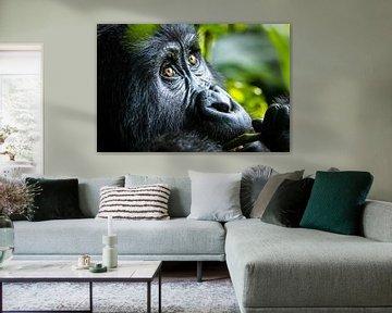 Berggorilla in Uganda