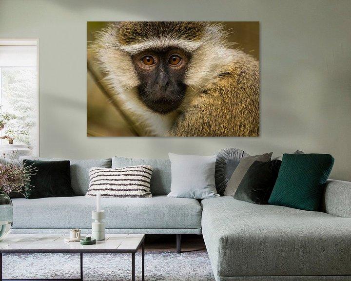 Sfeerimpressie: vervet aap in Oeganda van Dennis Van Den Elzen