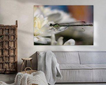 Libelle von Eveline Habing