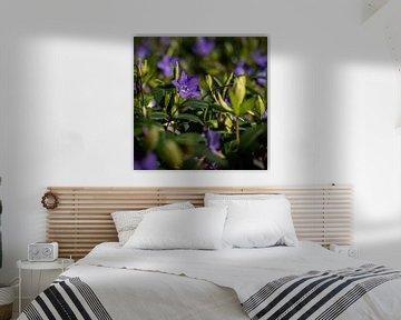 Frühlingsblumen von Jens Sessler