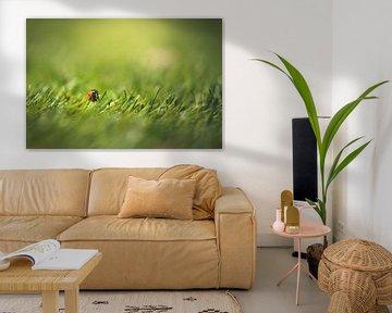 Marienkäfer im Gras von Inge Smulders