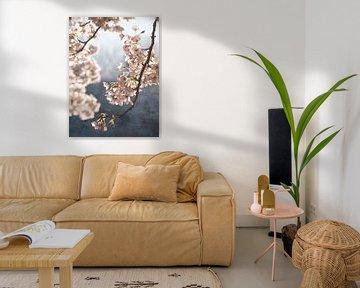 Malerische Frühlingsblüte von Rob Visser