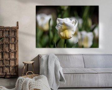 Tulpe von Ingrid Aanen