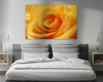 Gele roos von LHJB Photography