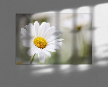 White daisy von LHJB Photography