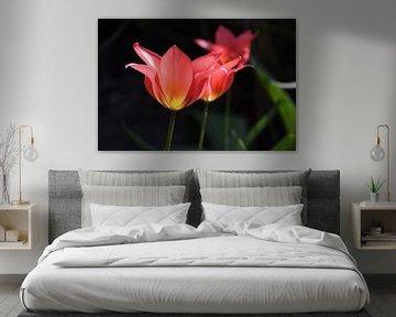 Tulpen in zonlicht / Tulips in sunlight van Henk de Boer
