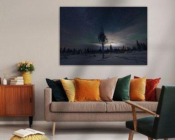 ein Baum bei Nacht von Robin van Maanen