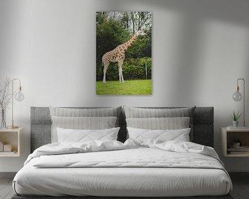 Girafe sur Mêgan Nauta