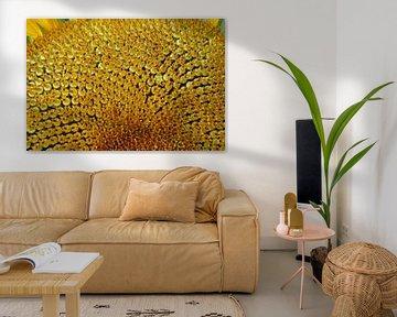 Makro-Fotografie der goldenen Herz-Sonnenblume von wil spijker