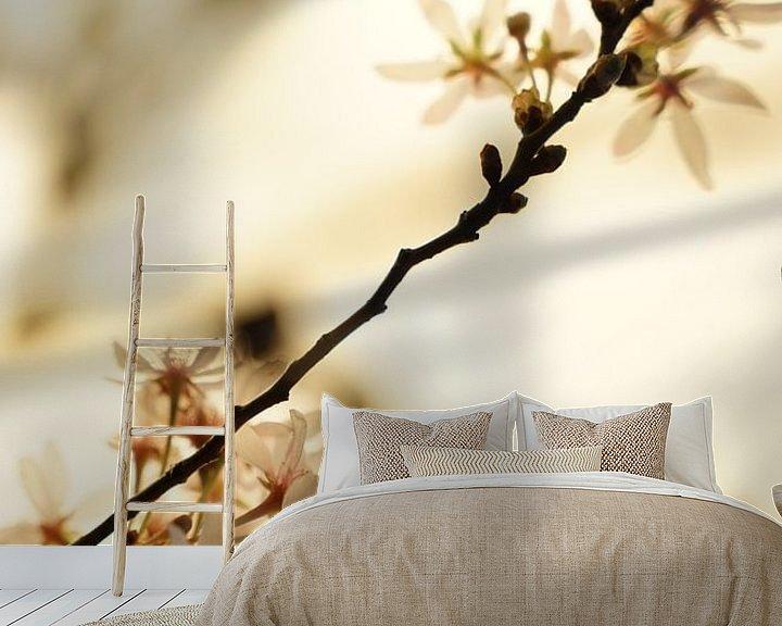 Beispiel fototapete: Kirschblüte von Tina Hartung