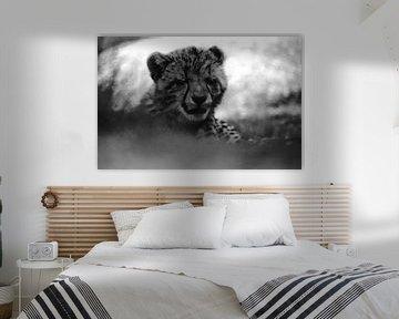 Porträt eines verschlafenen Gepardenjungen schwarz-weiß von Bobsphotography