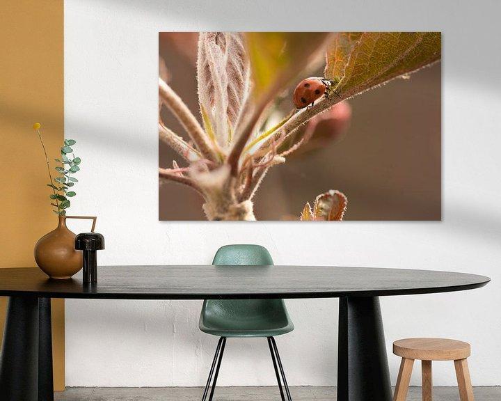 Sfeerimpressie: Kruipend in de appelboom van JM de Jong-Jansen