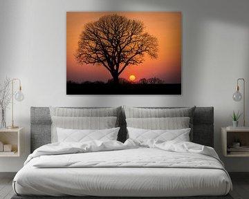 boom in de avondzon van Hans Brasz