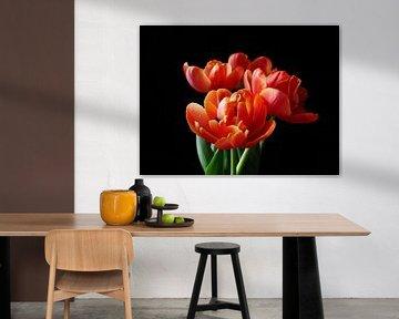 Bos tulpen tegen zwarte achtergrond