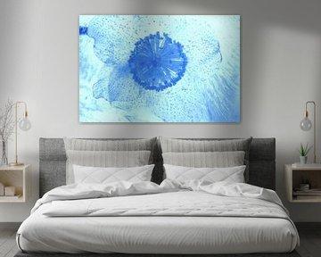 Christrose Blau von Marc Heiligenstein