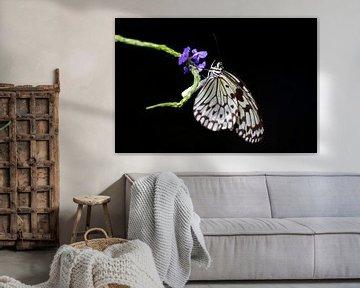 Schmetterling von Angelika Stern