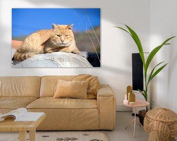 Ongestapelde kat van Angelika Stern