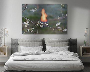 Cerisier à pot de feu sur Moetwil en van Dijk - Fotografie