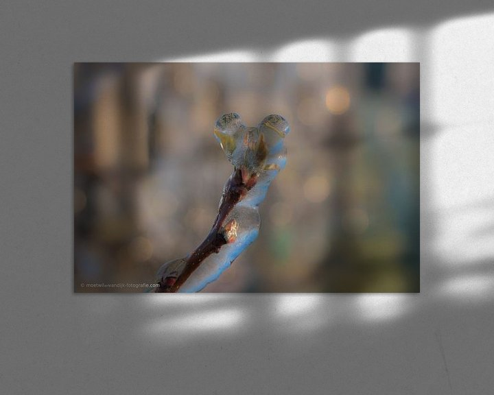 Sfeerimpressie: Beregenen bloesem van Moetwil en van Dijk - Fotografie