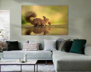Eichhörnchen im Wasser mit Walnuss von Michel de Beer