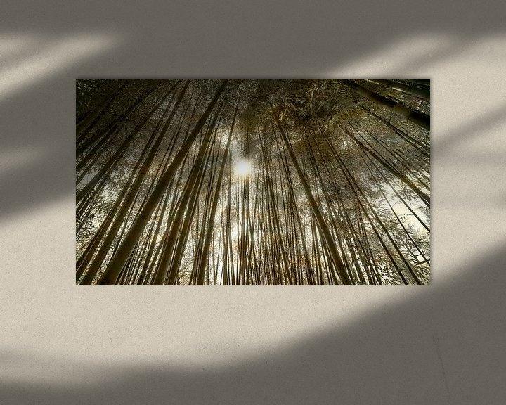 Sfeerimpressie: 0620 Bamboo forest - Remix van Adrien Hendrickx