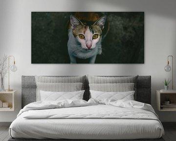 Katze von Paul Hemmen