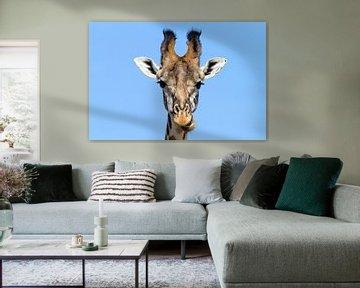 Neugierige Giraffe von Angelika Stern