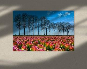 Tulpenveld in de polder, Nederland van Rietje Bulthuis