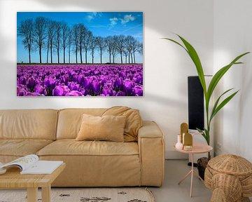 Tulpen in de polder, lente! van Rietje Bulthuis