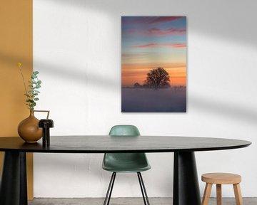 Solitaire schoonheid. van Sander van der Werf