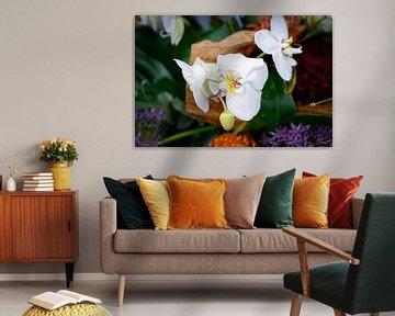 Orchidee von Dominique van Ojik