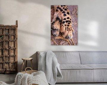 Nahaufnahme von Gepardenbeinen mit Krallen von Bobsphotography