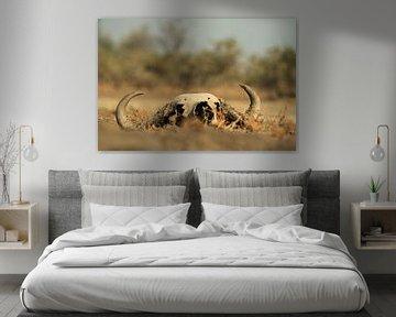 Schedel dode buffel in de natuur van Bobsphotography