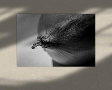 Stillebenbild einer Zwiebel von Maureen Materman