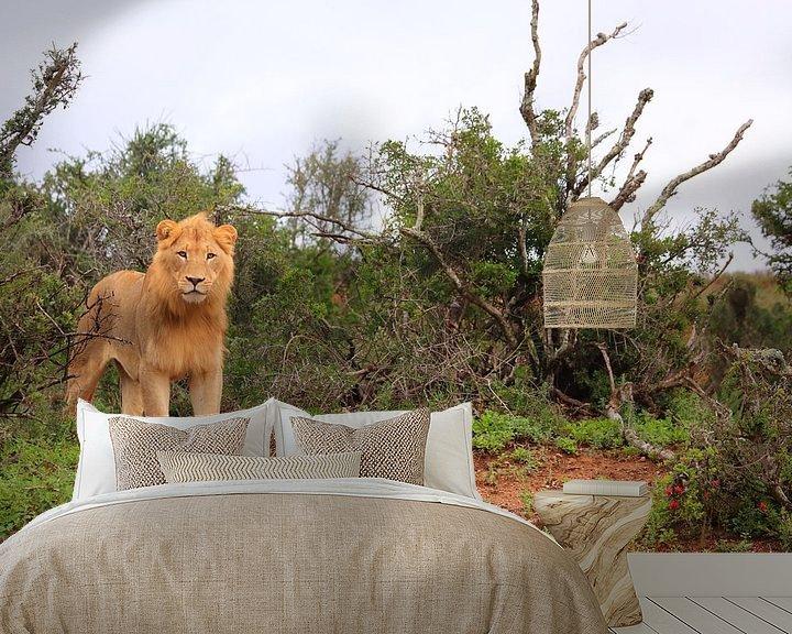 Sfeerimpressie behang: Afrikaanse leeuw in natuurlijke omgeving van Bobsphotography