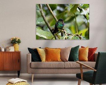 Kleiner bunter Kolibri von Mirjam Welleweerd