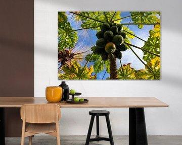 Papayas im Baum von Adri Vollenhouw