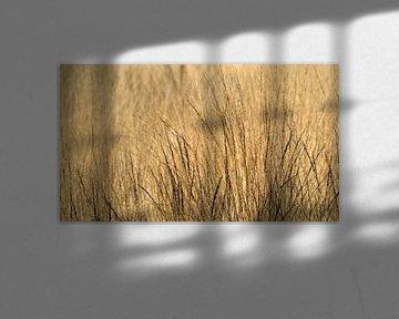 Trockenes Gras mit Hintergrundbeleuchtung von Eye to Eye Xperience By Mris & Fred