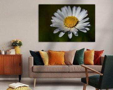 Gänseblümchen von Jaap van den Bosch
