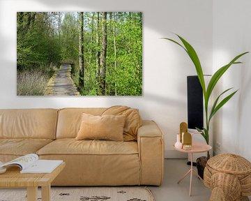 Plattform durch den Wald von Gerard de Zwaan