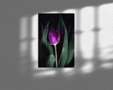 Tulp in het donker van Marjon Boerman