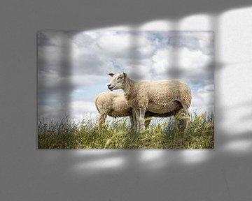 Schapen tegen een typische hollandse wolken lucht. Foto is genomen in Friesland. Wout Kok One2expose van Wout Kok
