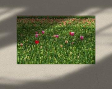 Tulipfield von Eye to Eye Xperience By Mris & Fred