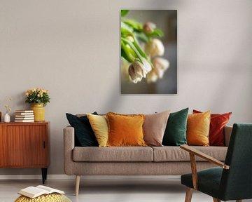 Hängende Tulpen von Michael Fousert