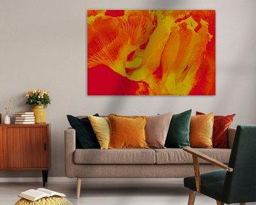Alpenveilchen in Orange von Marc Heiligenstein