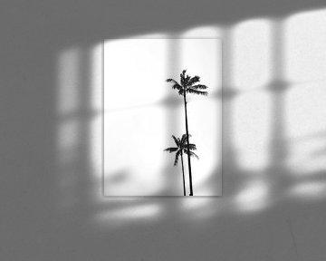 Palme schwarz weiss von Studio Aspects